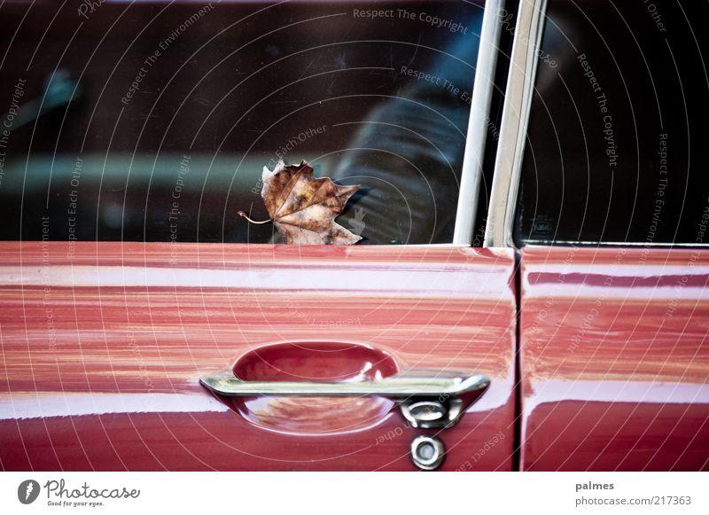 Langzeitparker rot ruhig Blatt PKW glänzend stehen Autotür Mobilität parken Autofenster Oldtimer KFZ Anschnitt Bildausschnitt Verkehrsmittel Türschloss