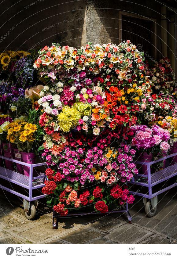FlowerPower kaufen Pflanze Blume Rose Tulpe Blatt Blüte Grünpflanze Topfpflanze Blumenstrauß Kitsch Krimskrams Kunststoff Blühend Duft mehrfarbig rot Romantik