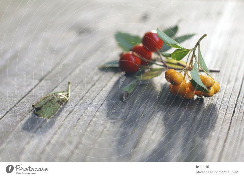 Herbstspaziergang Natur Pflanze grün rot schwarz gelb Garten grau braun Park Schönes Wetter Spaziergang Jahreszeiten Sammlung finden