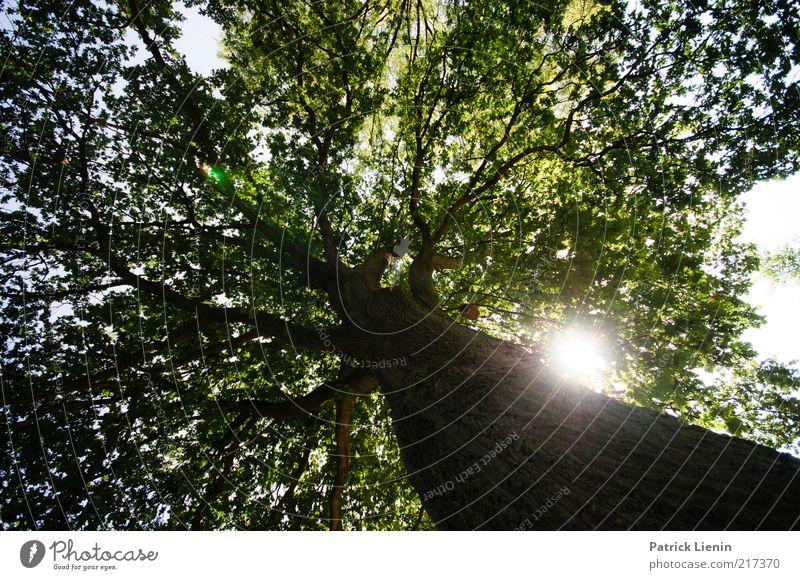 Saturday Sun Umwelt Natur Pflanze Urelemente Luft Sonne Sonnenlicht Sommer Wetter Schönes Wetter Baum Wachstum groß hell Ast Blätterdach Stimmung Baumrinde Holz