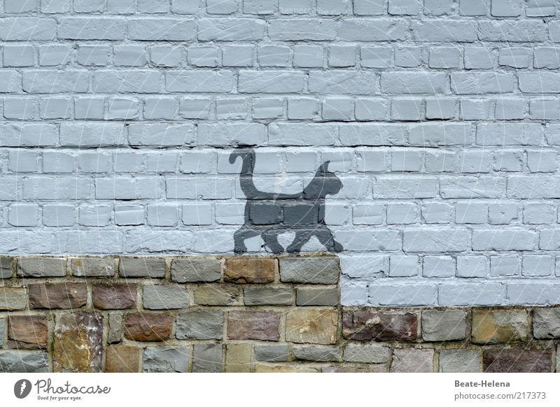 Vor dem Katzensprung Freude Tier Wand Bewegung grau Stein Mauer Katze Zufriedenheit Graffiti lustig elegant laufen Fassade Treppe Lebensfreude