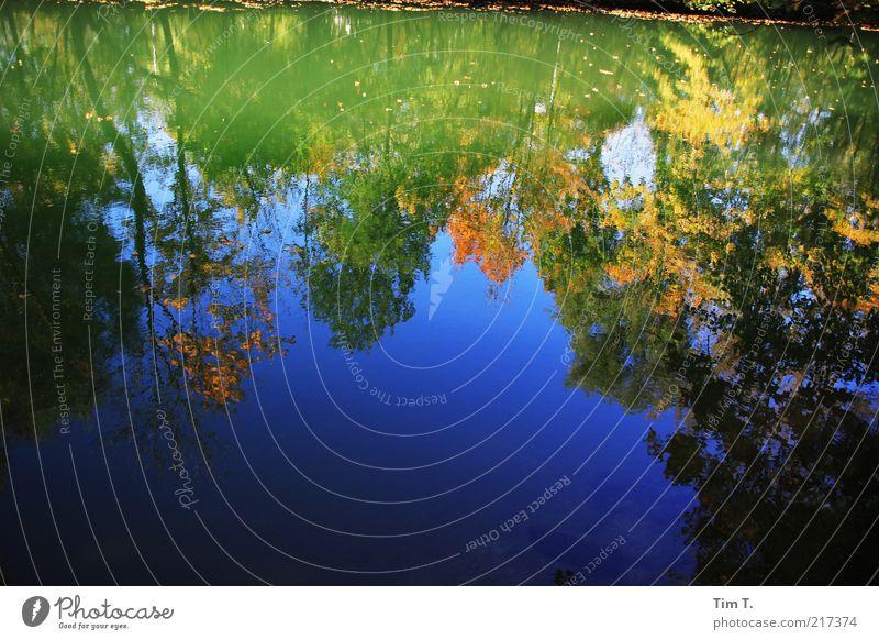 Herbst am Fluß Umwelt Natur Landschaft Pflanze Baum Flussufer Wasser Klima Farbfoto mehrfarbig Außenaufnahme Menschenleer Tag Licht Schatten Kontrast