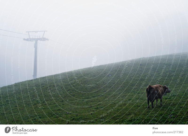 vorsaison Herbst Wetter schlechtes Wetter Nebel Wiese Feld Hügel Tier Kuh 1 stehen kalt Skilift dunkel Farbfoto Außenaufnahme Morgendämmerung Tag Rückansicht