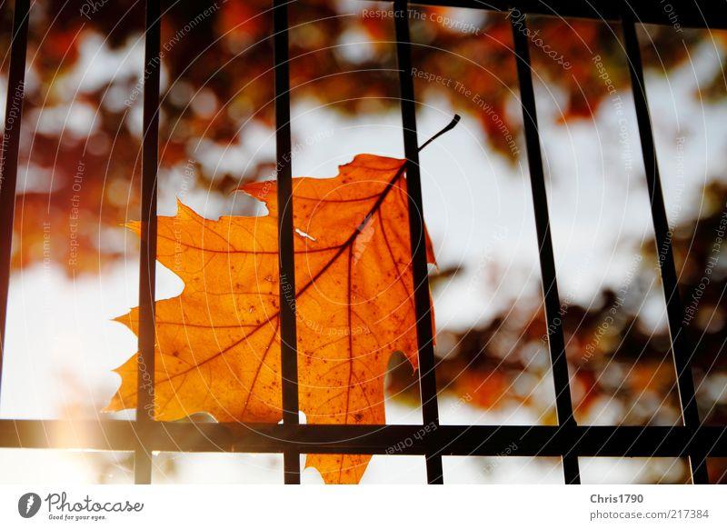 Herbst-Haft II Natur schön Himmel Baum Sonne Pflanze rot ruhig Blatt Einsamkeit Gefühle träumen Stimmung hell gold