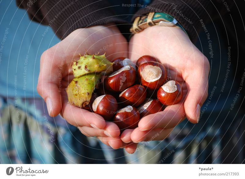 Eine Hand voll Herbst Finger 1 Mensch Natur Schönes Wetter Kastanie Stoff Armbanduhr Herz berühren entdecken festhalten natürlich blau braun grün schön ruhig