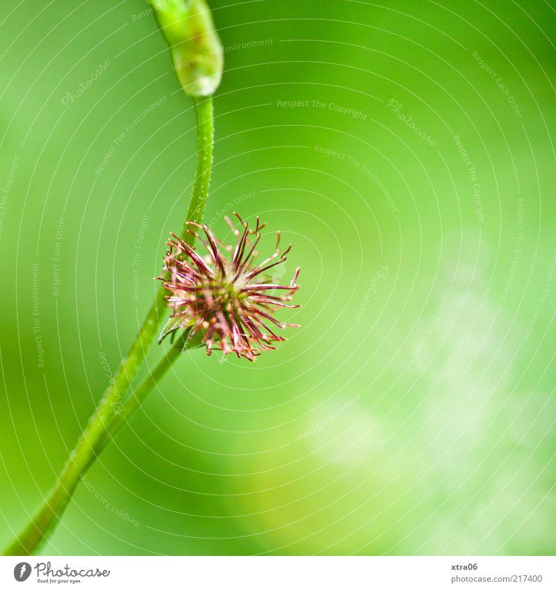 es grünt so grün Umwelt Natur Pflanze Blüte Grünpflanze Farbfoto Außenaufnahme Nahaufnahme Detailaufnahme Makroaufnahme Textfreiraum rechts Sonnenlicht 1