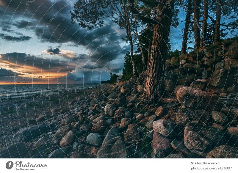 Sonnenuntergang in der Ostsee mit Kiefern Tourismus Sommer Strand Meer Winter Haus Natur Landschaft Himmel Horizont Baum Wald Felsen Küste Skyline frieren hell