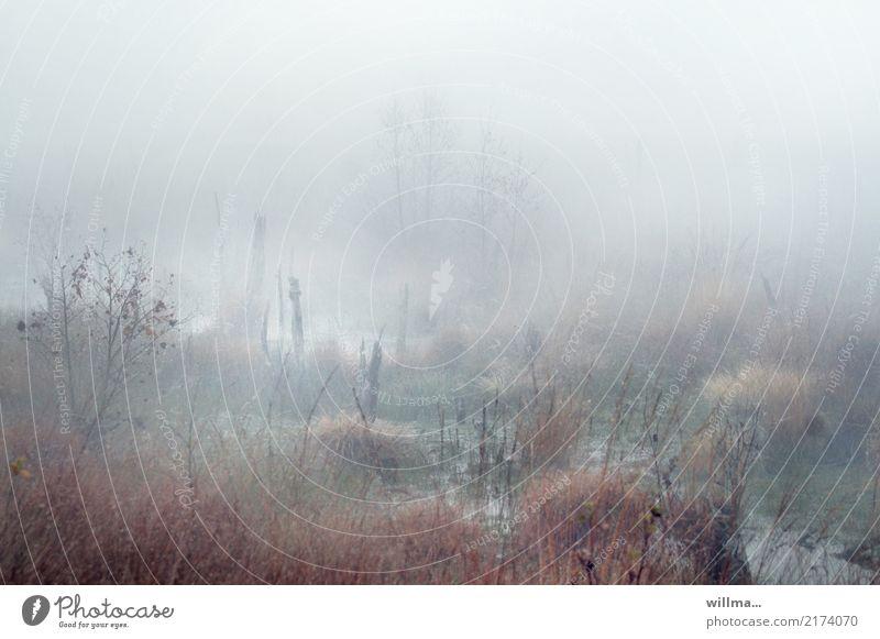 frühmoorgens Natur Pflanze Landschaft natürlich Nebel Sumpf Moor Morgennebel Moorsee