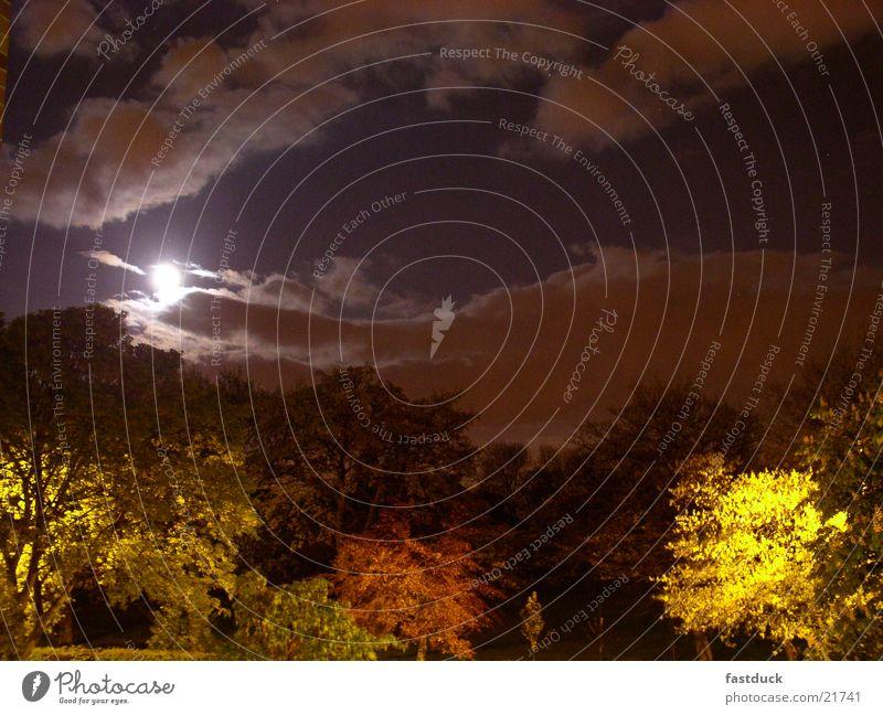 moon time Baum Winter dunkel Mond England mystisch Großbritannien Vollmond