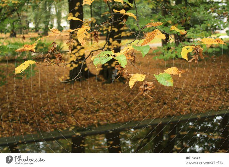 Herbststimmung im Park Umwelt Natur Landschaft Pflanze Erde Wasser schlechtes Wetter Baum Blatt Grünpflanze Wald Flussufer Bach dunkel nass braun grün Farbfoto