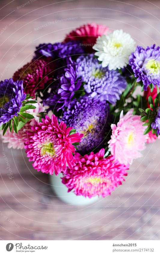 Herbststrauß Astern Blume Natur Vase Blumenstrauß Blüte pflücken rosa weiß gelb grün violett Geschenk schenken