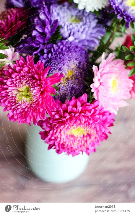 Astern Blume Herbst Natur Vase Blumenstrauß Blüte pflücken rosa weiß gelb grün violett