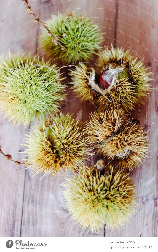 Esskastanien Natur grün Speise Essen Herbst Lebensmittel braun stachelig Stachel Maronen Kastanienbaum