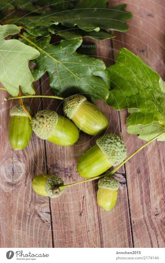 Hallo Herbst Natur Eicheln Blatt grün Holz Sammlung ansammeln Suche