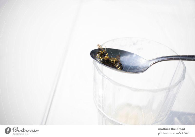 SIRUPFALLE weiß Sommer Tier Tod Glas Ende Flügel Falle Besteck Anschnitt stachelig Bildausschnitt Löffel Wespen Plage Detailaufnahme