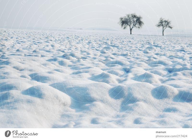 Frost Natur Baum Einsamkeit ruhig Landschaft Winter kalt Umwelt Schnee Eis Feld Erde frisch Hügel Umweltschutz