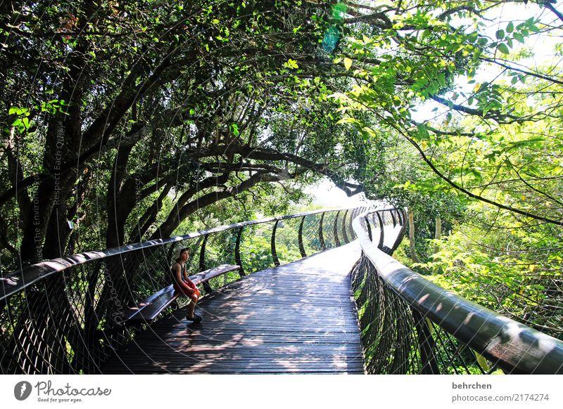 doppeldeutigkeiten | tunnelblick Natur Pflanze Sommer schön grün Baum Erholung Blatt Wald Garten Park sitzen Sträucher Schönes Wetter beobachten Pause