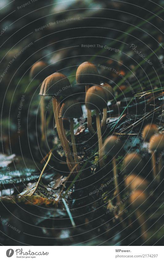 pilze Natur Pflanze Blatt Wald Umwelt kalt Herbst Pilz Waldboden