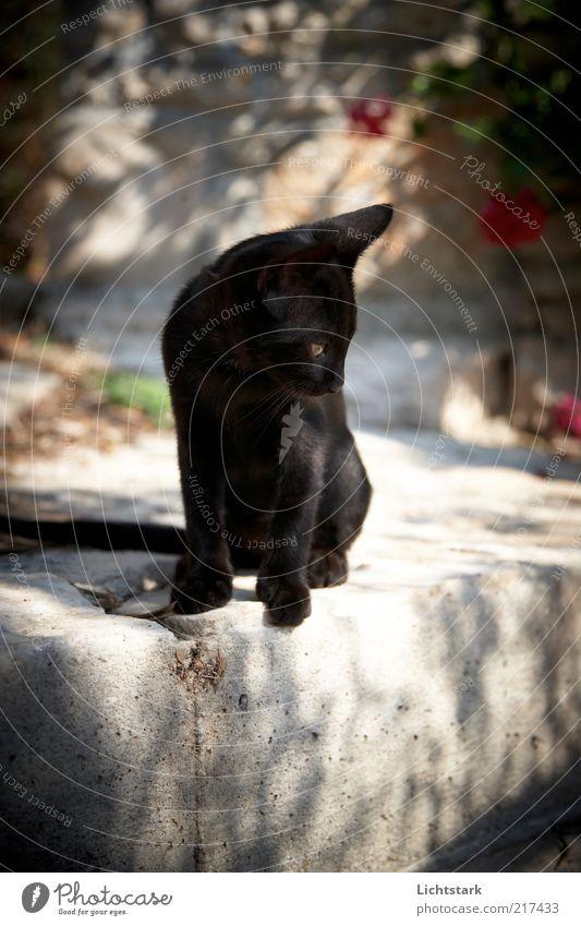 komm komm -nur noch ein kleines Stück Katze Natur Tier Farbe schwarz Tierjunges Zeit sitzen Beton beobachten Fell Jagd Mut frech Haustier freilebend