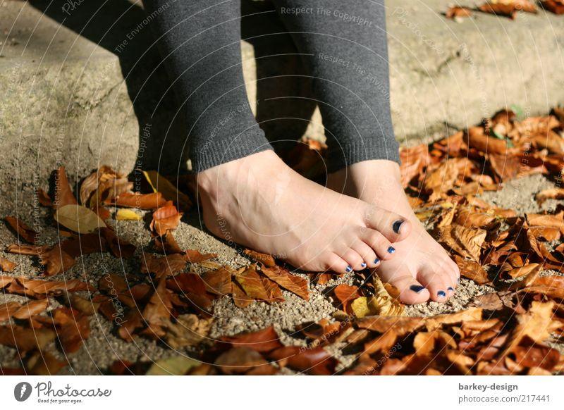Der Herbst ist da Frau Mensch Natur rot Blatt Erwachsene gelb feminin Gefühle Fuß gold Treppe ästhetisch außergewöhnlich niedlich