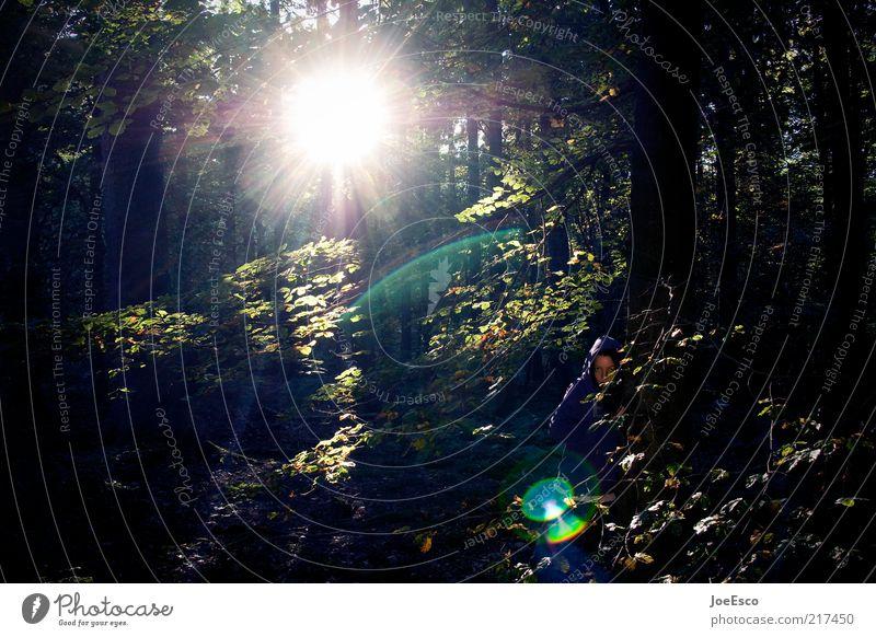 wildness 01 Ausflug Freiheit Mensch Leben Natur Sonnenaufgang Sonnenuntergang Sonnenlicht Herbst Pflanze Baum Sträucher Wald entdecken sitzen außergewöhnlich