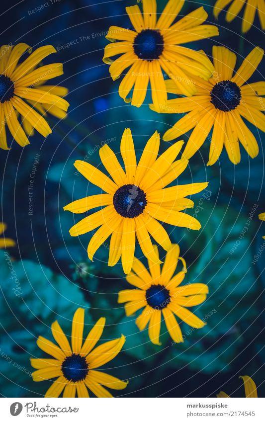 Gerbera Natur Pflanze Landschaft Blume Haus Blatt gelb Lifestyle Blüte Liebe Garten Zusammensein Freundschaft Wachstum ästhetisch Lebensfreude
