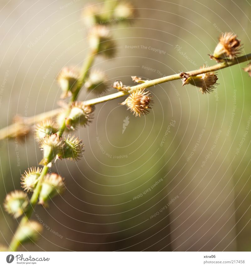 stacheliger herbst Natur grün Pflanze Umwelt Sträucher exotisch Stachel stachelig