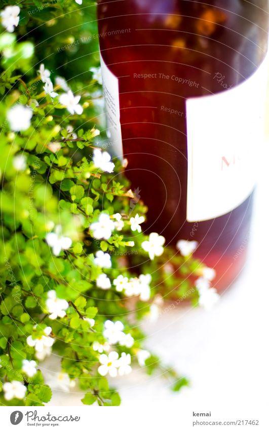 Rosé an Blumen Lebensmittel Getränk Alkohol Wein Roséwein Flasche Weinflasche Lifestyle elegant Stil Pflanze Sommer Blatt Blüte Blühend hell lecker Alkoholsucht