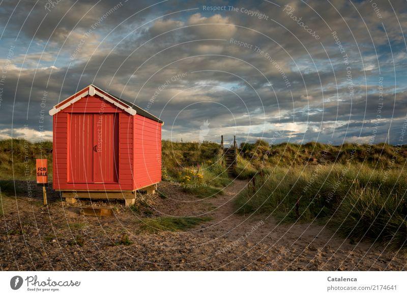 FOR SALE Landschaft Sand Gewitterwolken Sommer Schönes Wetter Gras Sträucher Ginster Dünengras Küste Strand Hütte Holz blau braun grün orange rot Stimmung