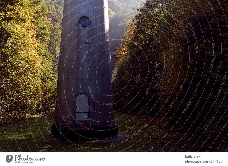 Ein Männlein steht im Walde... Natur Pflanze Herbst Baum dunkel braun gelb grün geheimnisvoll Berge u. Gebirge Harz Sonnenlicht Tür Fenster Seilbahn Säule