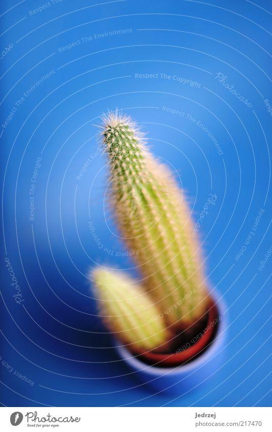 Unscharf? grün blau Pflanze rot Stil Traurigkeit warten klein Umwelt Wachstum stehen nah Dekoration & Verzierung natürlich atmen
