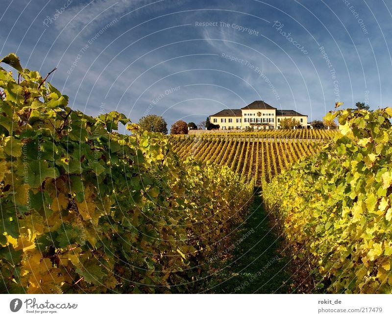 Goldener Rheingau Natur Himmel grün Blatt gelb Landschaft Feld gold Wein lang Burg oder Schloss Rheinland-Pfalz Pflanze parallel Weintrauben Sehenswürdigkeit