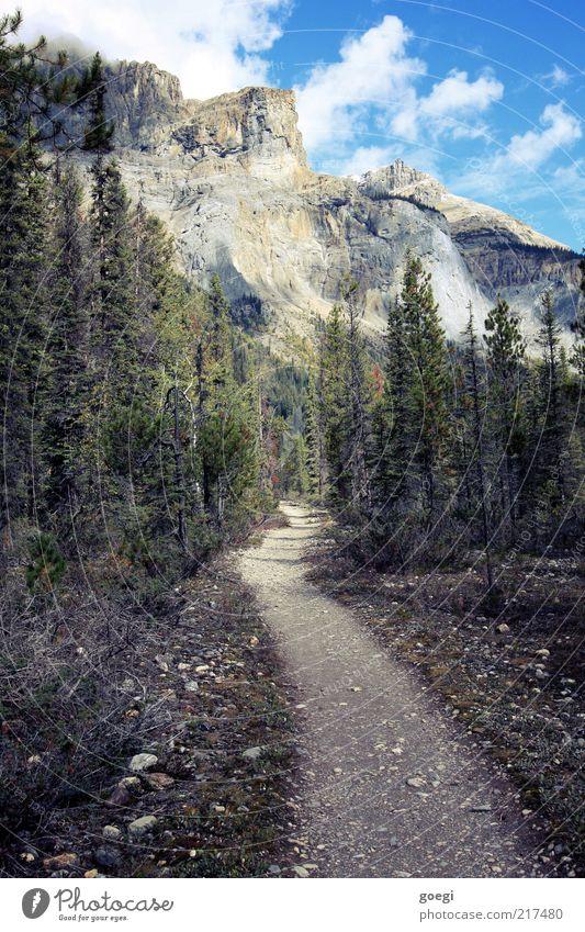 Pfad gefunden Natur Landschaft Pflanze Himmel Wolken Sommer Herbst Schönes Wetter Baum Wald Felsen Berge u. Gebirge Gipfel Kanada Wege & Pfade Stein Farbfoto