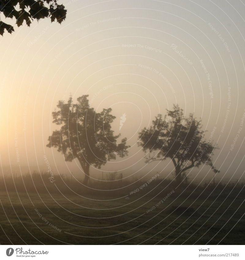 doppel Natur schön Himmel Baum Pflanze Sommer ruhig Blatt Wiese Gras Landschaft Nebel Umwelt ästhetisch Romantik Ende