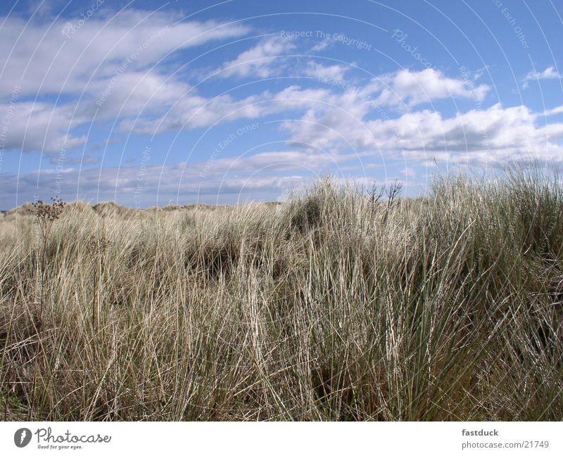 best of scotish beach weather Himmel blau Strand Wolken Gras Schottland Großbritannien