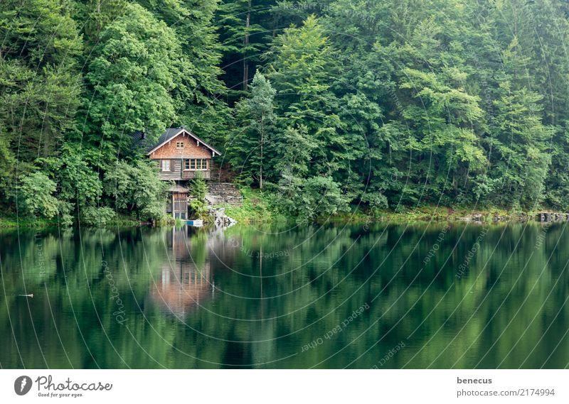 Stille am See Natur Pflanze Sommer grün Wasser Baum Landschaft ruhig Wald Umwelt Idylle Hütte Anlegestelle Glätte Symmetrie