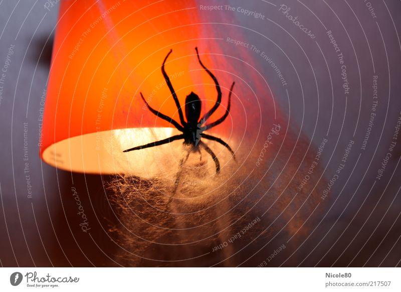 Halloween-Deko Tier Lampe orange Dekoration & Verzierung gruselig Ekel Glühbirne Spinne Halloween Spinnennetz Lampenschirm Spinngewebe