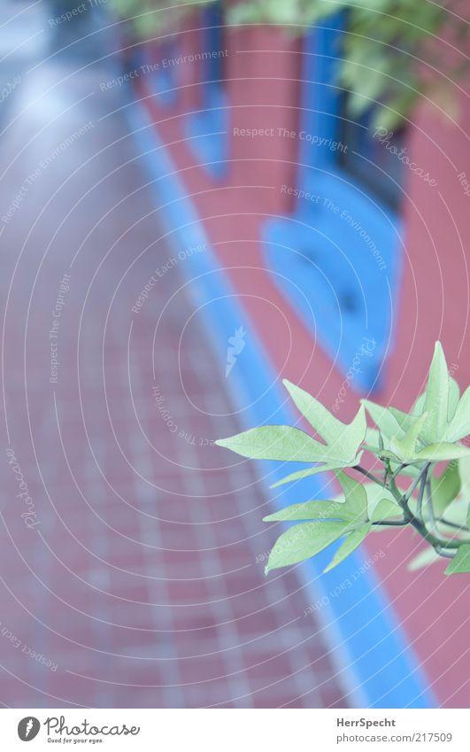 RGB Pflanze Blatt Grünpflanze Haus Mauer Wand Fassade Fenster blau grün rot Farbe mehrfarbig Fliesen u. Kacheln Anstrich Farbfoto Außenaufnahme Menschenleer