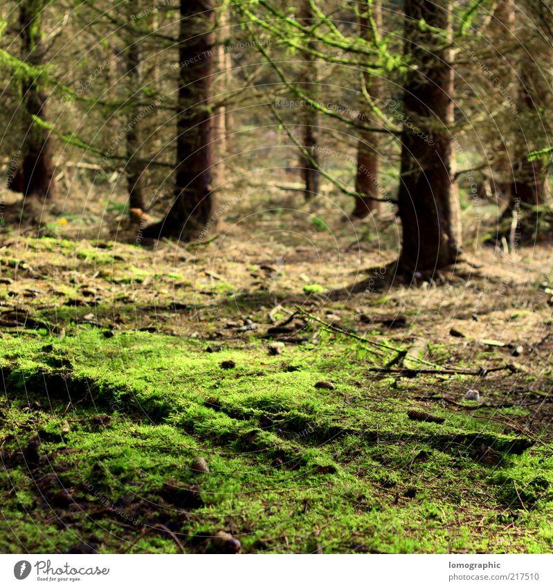 Famoos Natur grün Baum Ferien & Urlaub & Reisen ruhig Wald Erholung Herbst Freiheit Landschaft Umwelt braun Ausflug Tanne Baumstamm Moos