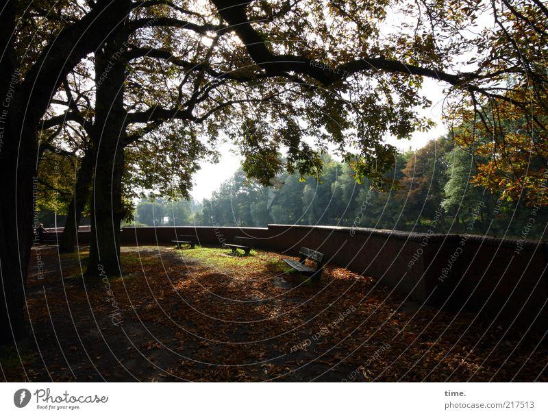 Autumn Leaves Baum Gegenlicht Außenaufnahme Ast Blatt Herbst gold Bank Mauer friedlich Sehnsucht Erholung Pause genießen Nachmittag Herbstlaub Sonnenstrahlen