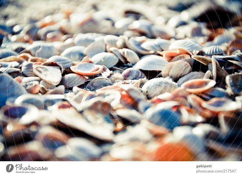 ganz viele Natur Strand Umwelt Sand Küste Nordsee Lebensfreude Schönes Wetter Muschel Verschiedenheit mehrfarbig Tier Vielfältig Menschenleer