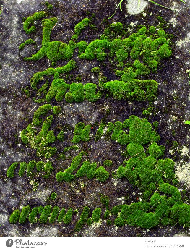 Tod und Leben alt grün Pflanze ruhig Stein Religion & Glaube Wachstum Schriftzeichen Hoffnung Trauer Buchstaben Vergänglichkeit Ende unten