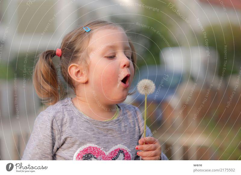 Pusteblume Spielen Kind Mensch feminin Kleinkind Mädchen 1 3-8 Jahre Kindheit Natur Pflanze Blume Fröhlichkeit frisch Löwenzahn Taraxacum kindlich Farbfoto