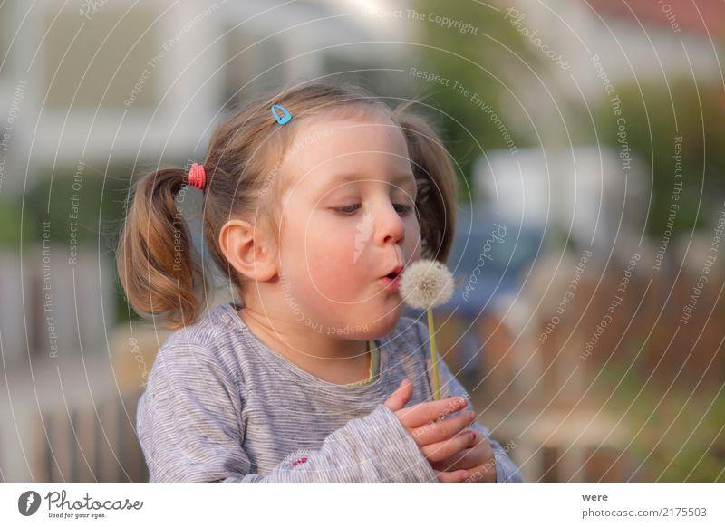 Und pusten! Spielen Kind Mensch feminin Kleinkind Mädchen 1 3-8 Jahre Kindheit Natur Pflanze Blume träumen Freude Glück Fröhlichkeit Abenteuer Löwenzahn