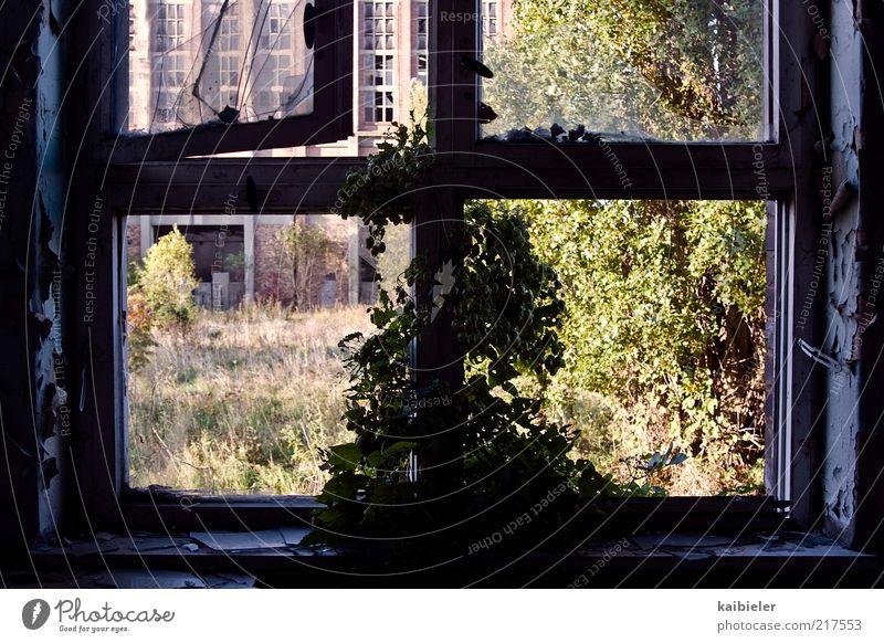 Fensterpflanze Pflanze Gras Sträucher Efeu Industrieanlage Ruine Mauer Wand Fassade Wachstum alt dunkel eckig blau grün rosa Verfall Vergangenheit