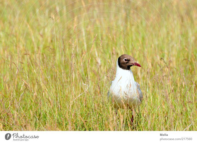 Verflogen Natur grün Pflanze Tier gelb Wiese Gras Freiheit Landschaft Vogel Umwelt Erde sitzen stehen natürlich Neugier