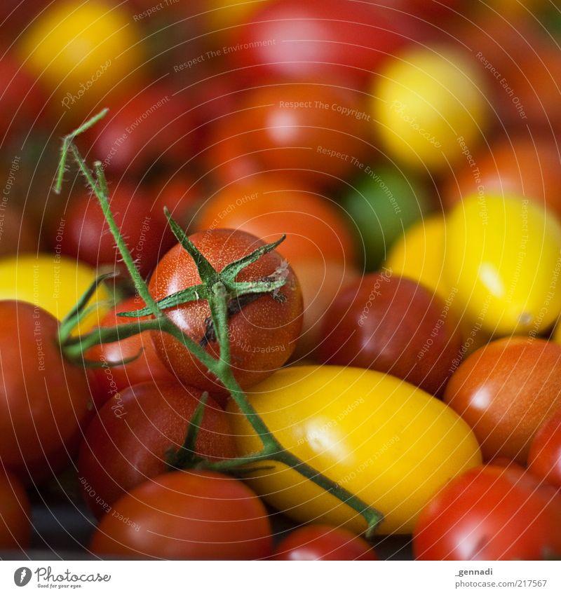 Bio Tomaten Lebensmittel Gemüse Stengel Ernährung Bioprodukte Vegetarische Ernährung Gesundheit einzigartig lecker natürlich saftig rot frisch Haufen vielfach
