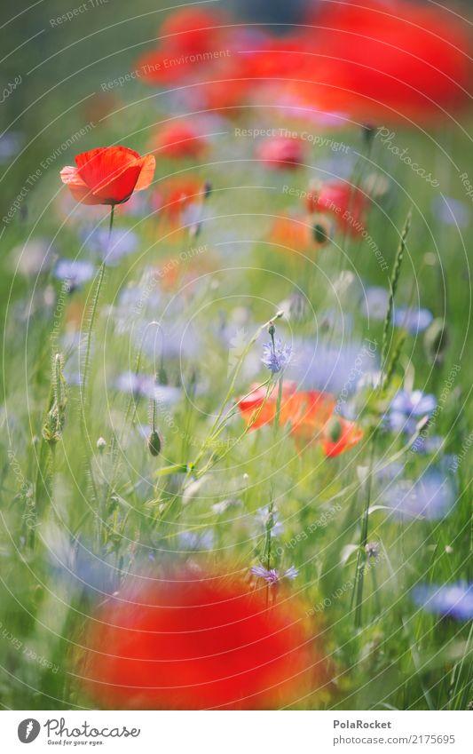 #A# Mohnfeld I Umwelt Natur ästhetisch Mohnblüte Wegrand rot Blume Wiesenblume Farbfoto mehrfarbig Außenaufnahme Detailaufnahme Experiment abstrakt Menschenleer