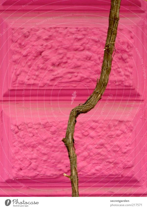 architektonisches mädchenfoto. alt Pflanze Wand Holz Architektur Mauer Stein Gebäude Linie braun rosa Fassade Wachstum Ast Mitte