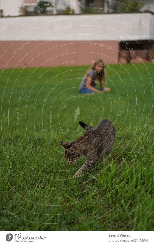 ImGrünen feminin Mädchen 1 Mensch Gras Dorf Garten Tier Katze natürlich grün Mauer hocken Suche Neugier Tigerfellmuster Hauskatze spionieren Geruch Farbfoto